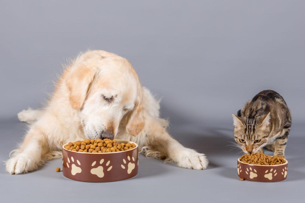 Τροφή σκύλου σε γάτα