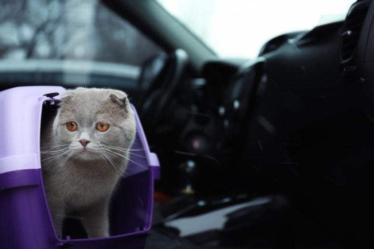 Με τη γάτα σας στο αυτοκίνητο