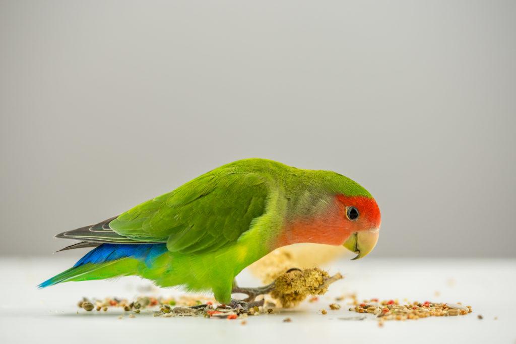 Διατροφή των lovebirds