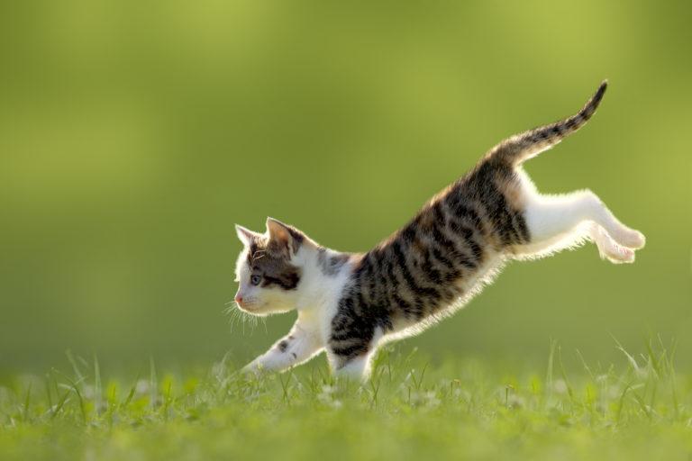 εξόρμηση γάτας