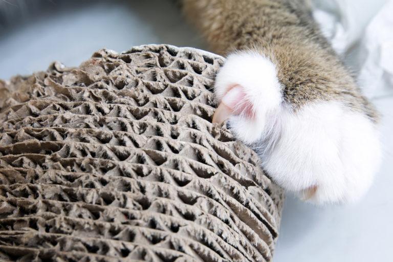 ονυχοδρόμιο γάτας