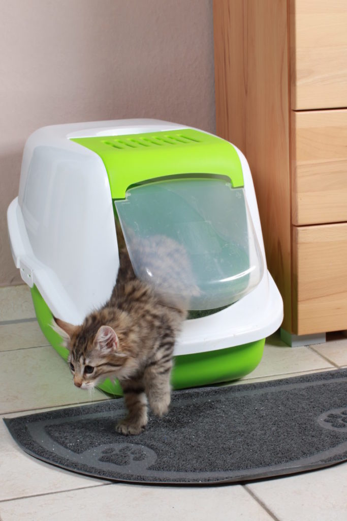 τουαλέτα υγιεινής γάτας