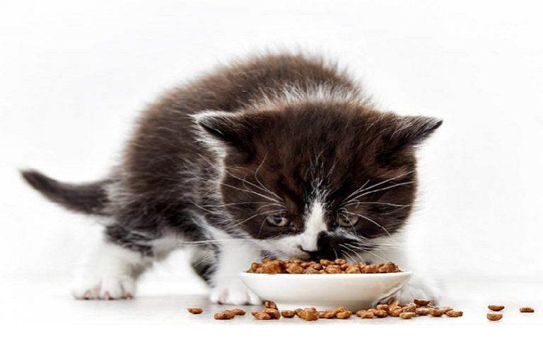 Diet for Kitten