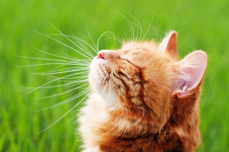 Καλοκαιρινά αξεσουάρ γάτας