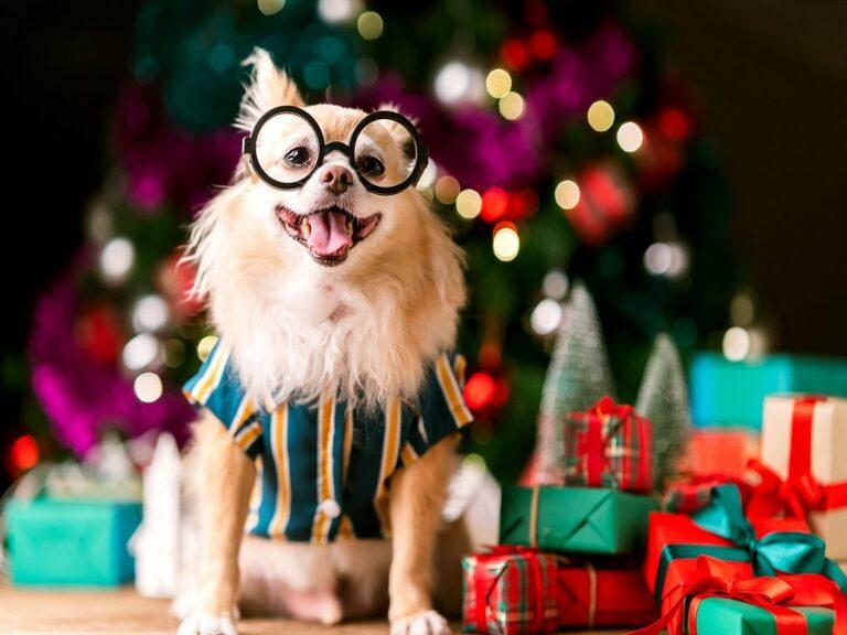 Χριστουγεννιάτικα δώρα για σκύλους