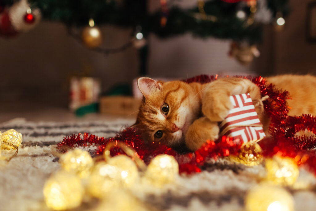Ginger cat playing with christmas toys