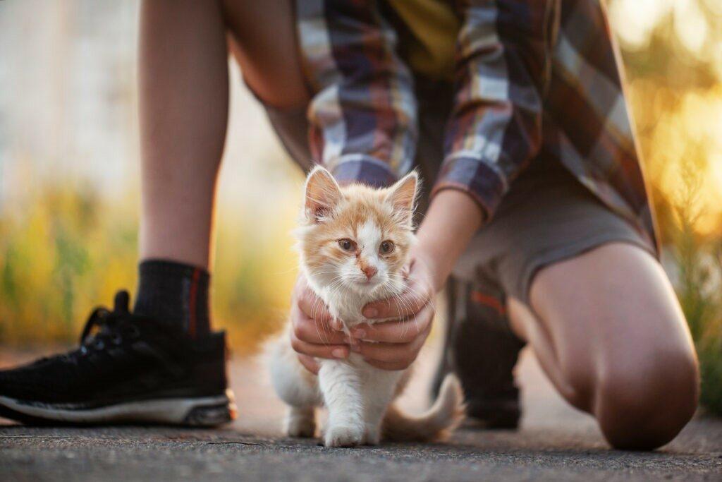 Εύρεση γάτας