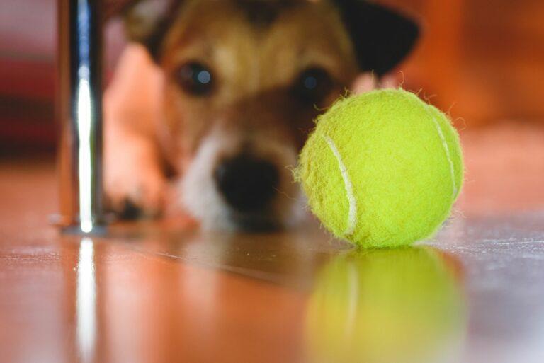 Μπάλα του τένις - επικίνδυνη για σκύλους