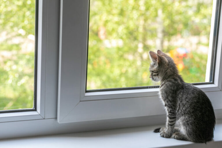 κορωνοϊός στις γάτες
