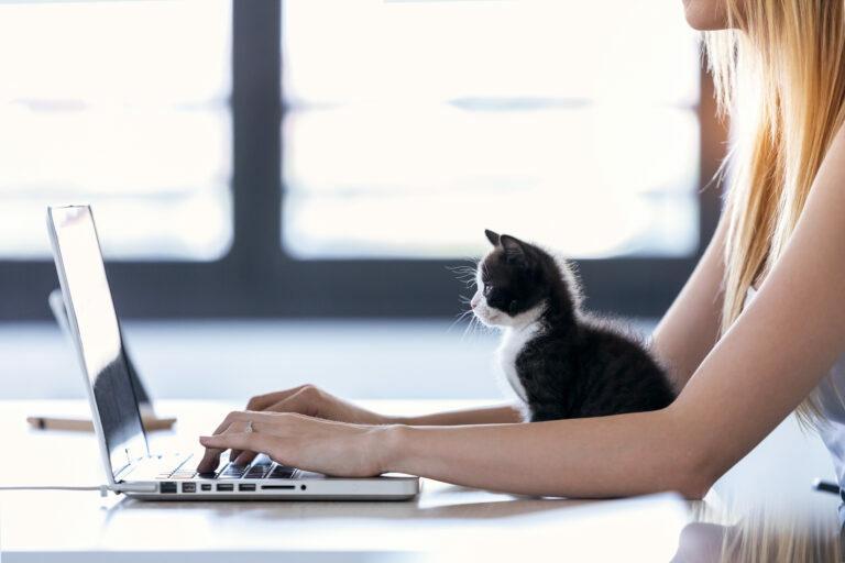 Γάτα μπροστά στον Η/Υ