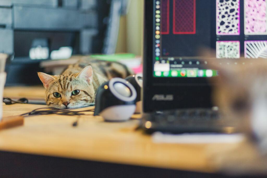 Γάτα επάνω στο γραφείο