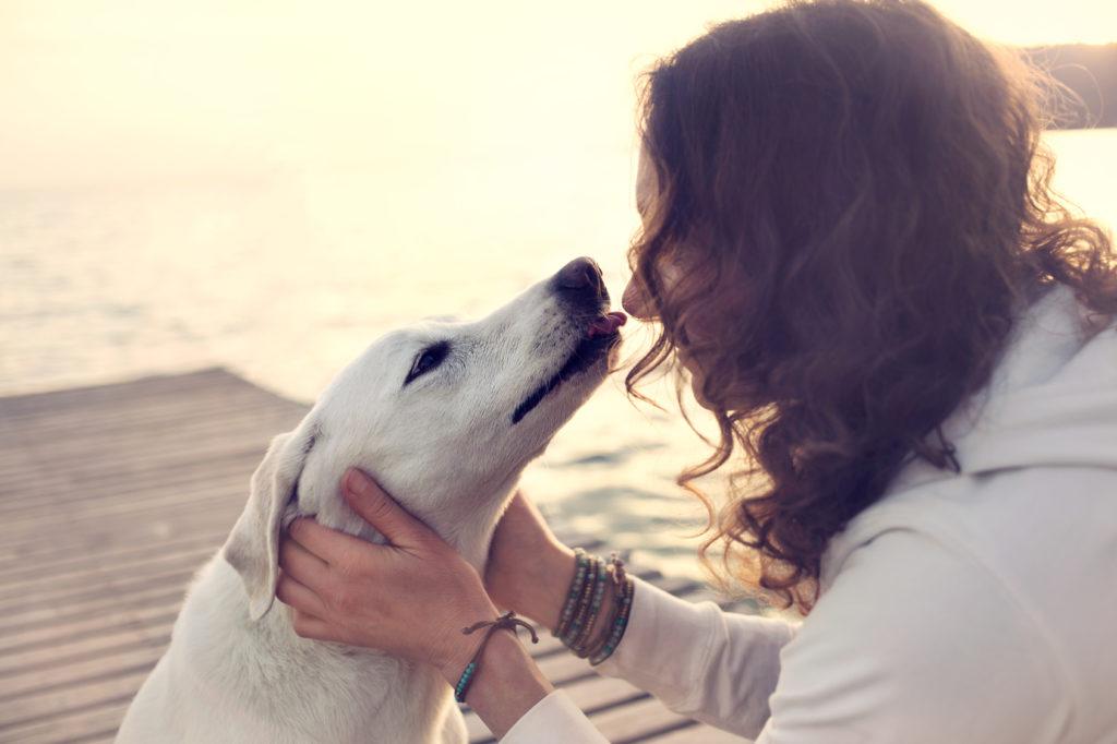 Φιλί σε σκύλο