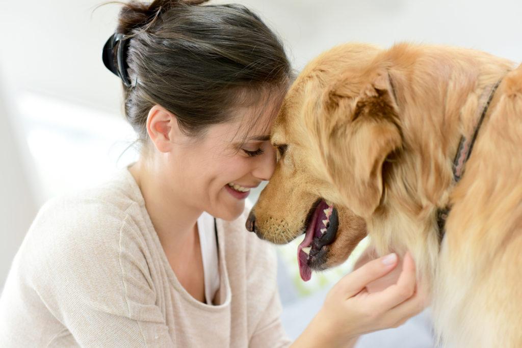 Φιλί σκύλου