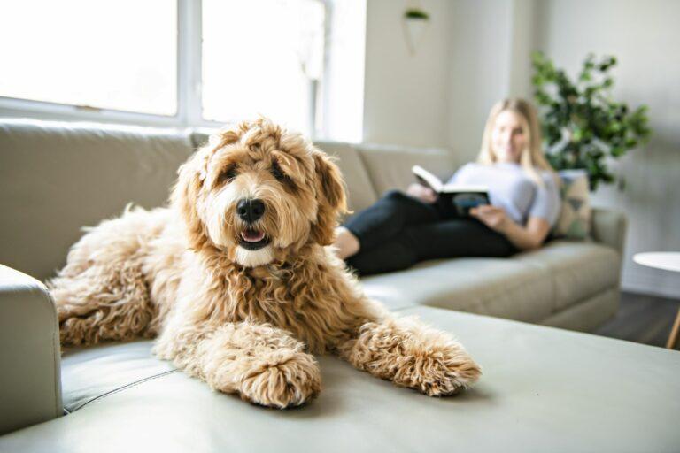 Υβριδικός σκύλος