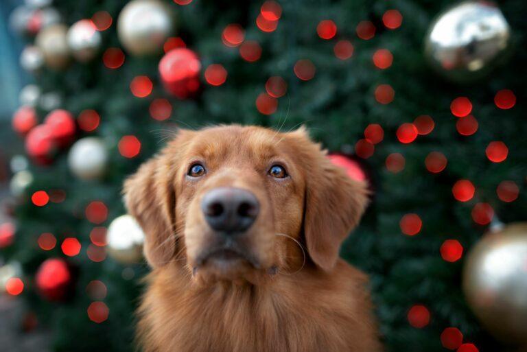Χριστουγεννιάτικο ημερολόγιο για σκύλους