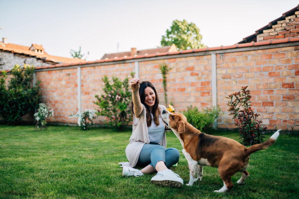Χαρούμενοι σκύλοι