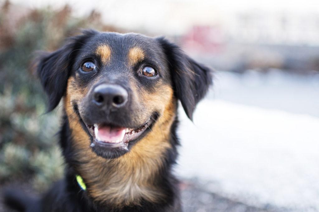Χαρούμενα μάτια σκύλου