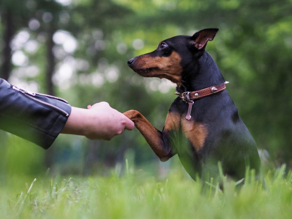 Σκύλος δίνει πόδι