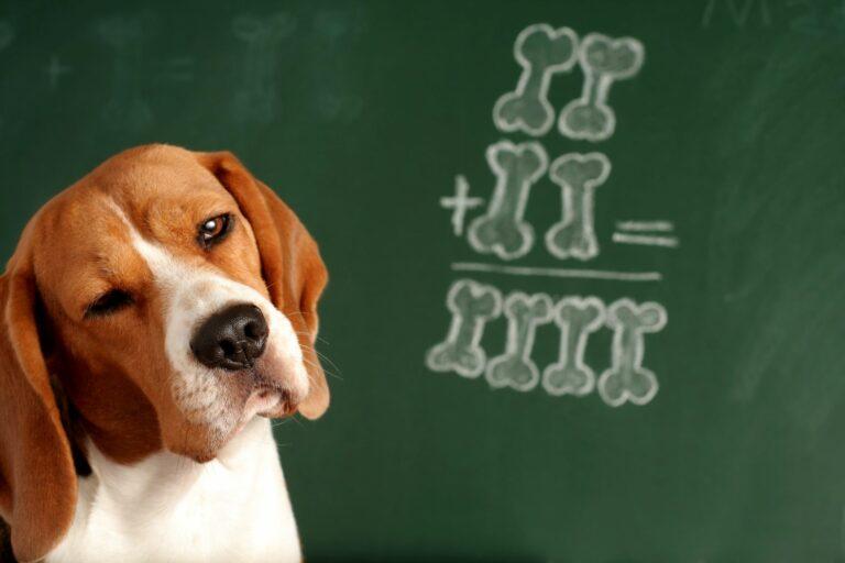 Σκύλος-πίνακας