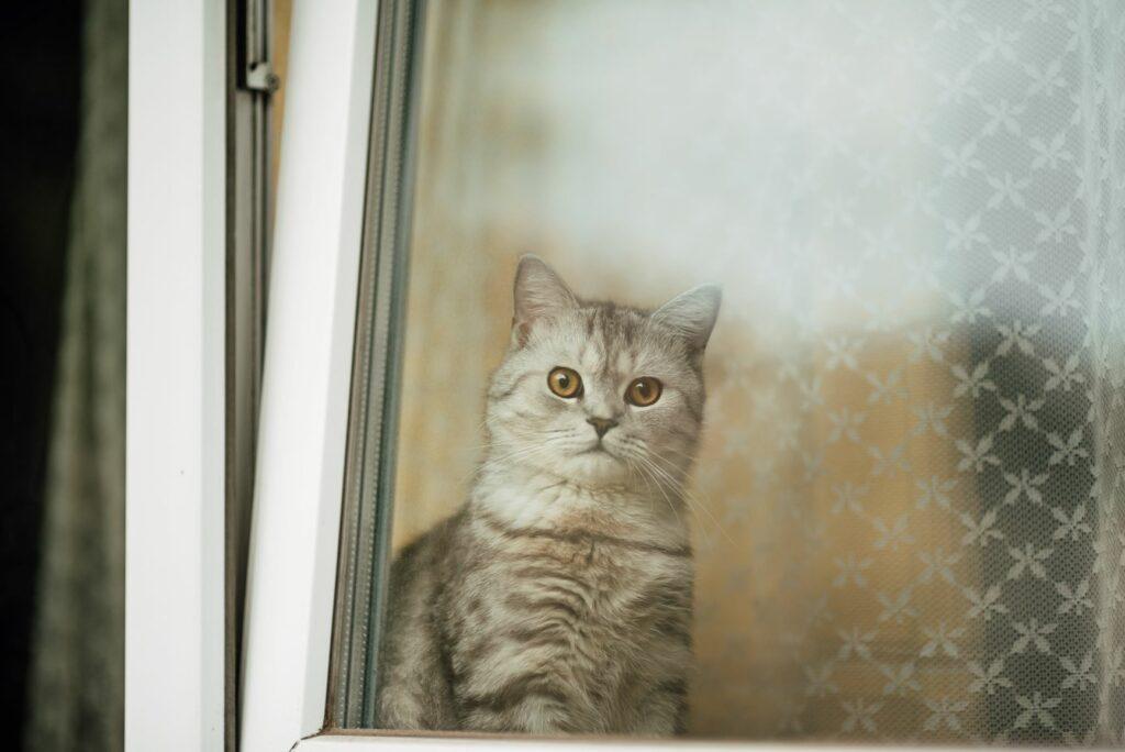 Γάτα μπροστά από παράθυρο με ανάκλιση