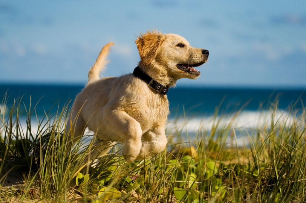 Παιχνίδι σκύλου στη θάλασσα