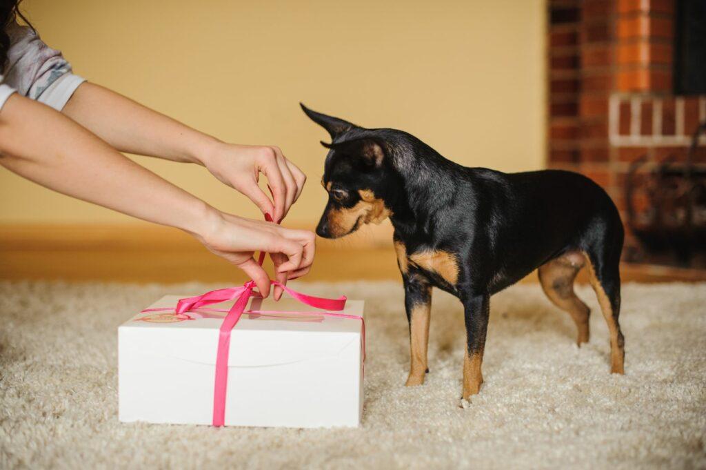 Δώρα Αγίου Βαλεντίνου για σκύλο