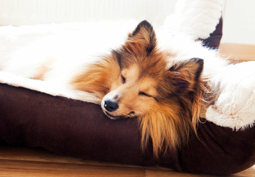 Κρεβάτι για σκύλους