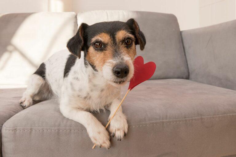 Ημέρα Αγίου Βαλεντίνου για σκύλο