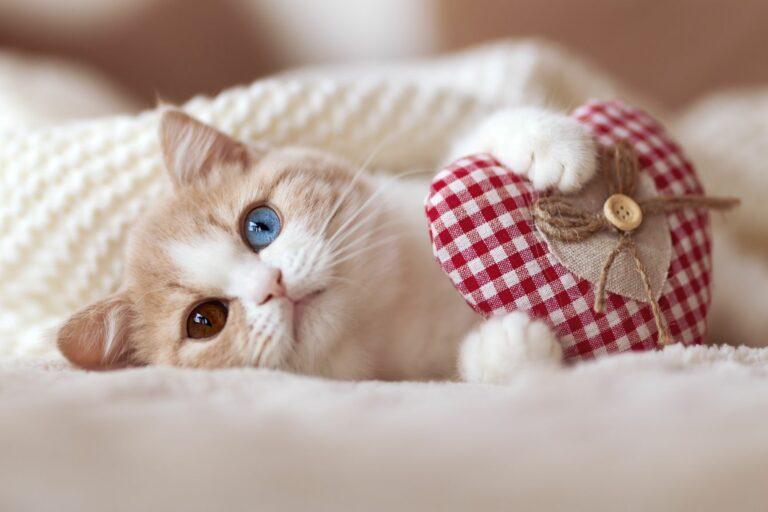 Παιχνίδι γάτας-καρδιά