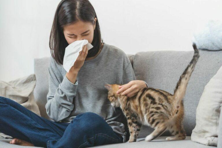 Αλλεργία στις Γάτες σε ανθρώπους